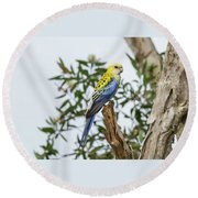 Pale-headed Rosella Round Beach Towel
