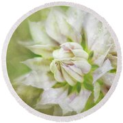Pale Pink Clematis Round Beach Towel