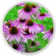 Pale Purple Coneflowers Round Beach Towel