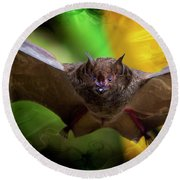 Pale Spear-nosed Bat In The Amazon Jungle Round Beach Towel
