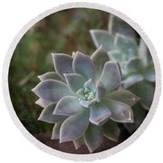 Pale Succulent On Artistic Background, Macro Round Beach Towel