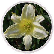 Pale Yellow Flowering Lily Blossom In A Garden Round Beach Towel