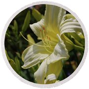 Pale Yellow Lily In A Garden Of Daylilies Round Beach Towel