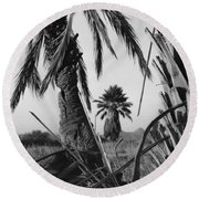 Palm In View Bw Horizontal Round Beach Towel
