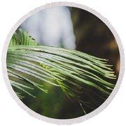 Palm Tree 5 Round Beach Towel