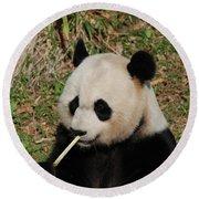 Panda Bear Eating Bamboo Shoots Up Close And Personal Round Beach Towel