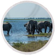 Panorama Of Elephant Herd Drinking From River Round Beach Towel