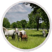 Panorama Of White Lipizzaner Mare Horses With Dark Foals Grazing Round Beach Towel