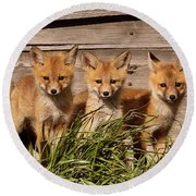 Panoramic Fox Kits Round Beach Towel