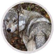 Panoramic Gray Wolf Yukon Round Beach Towel