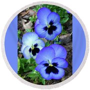Pansies 0823 Round Beach Towel