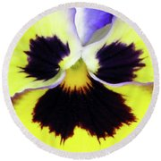 Pansy 09 - Thoughts Of You Round Beach Towel