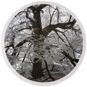Paper Mulberry In Infrared Round Beach Towel