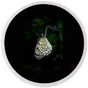 Paperwhite Butterfly Round Beach Towel