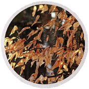 Papery Beech Leaves Round Beach Towel