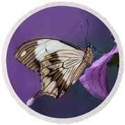 Papilio Dardanus On Violet Flowers Round Beach Towel
