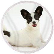 Papillon X Jack Russell Terrier Dog Round Beach Towel