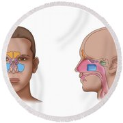 Paranasal Sinuses, Illustration Round Beach Towel