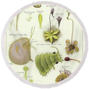 Parasites And Insectivorous Plants Round Beach Towel