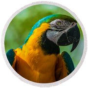 Parrot Face Round Beach Towel
