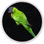 Parrot In Black Round Beach Towel