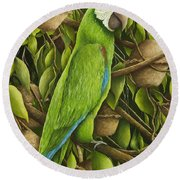 Parrot In Brazil Nut Tree Round Beach Towel