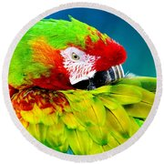 Parrot Time 1 Round Beach Towel