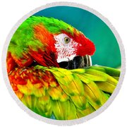 Parrot Time 2 Round Beach Towel