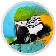 Parrot Time 3 Round Beach Towel