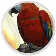 Parrot Watching Round Beach Towel