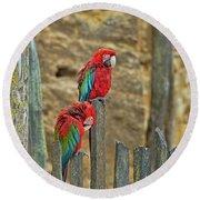 Parrots, Doue-la-fontaine Zoo, Loire, France Round Beach Towel