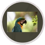 Parrot's Eye Round Beach Towel