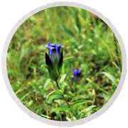 Parry's Mountain Gentian Round Beach Towel