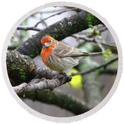 Partial-migrator House Finch Round Beach Towel