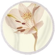 Pasae Alstroemeria By Flower Photographer David Perry Lawrence Round Beach Towel