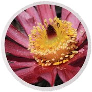Pasque Flower Macro Round Beach Towel