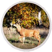 Passing Buck In Autumn Field Round Beach Towel