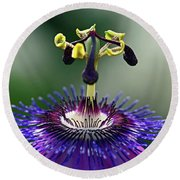 Passion For Purple  Round Beach Towel