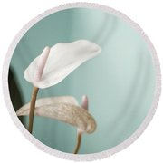 Pastel Color Of Anthurium Flower Round Beach Towel