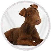 Patterdale Terrier Puppy Round Beach Towel