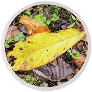 Paw Paw Leaf Fall Colors Round Beach Towel