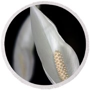Peace Lily Flower Round Beach Towel