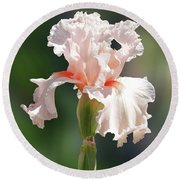 Peach Bearded Iris 2 Round Beach Towel