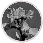 Peach Blossoms In Grayscale Round Beach Towel