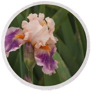 Peach Iris Round Beach Towel