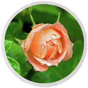 Peach Rose In The Rain Round Beach Towel