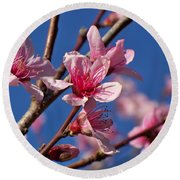 Peach Tree Blossoms Round Beach Towel