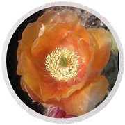 Peachy Opuntia Flower Round Beach Towel
