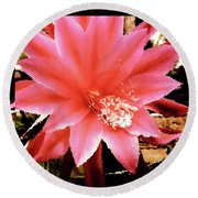 Peachy Pink Cactus Orchid Round Beach Towel