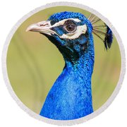 Peacock - 2 Round Beach Towel